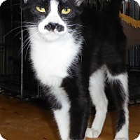 Adopt A Pet :: Frieda - Long Beach, CA