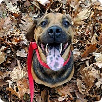 Adopt A Pet :: Cody - Elyria, OH