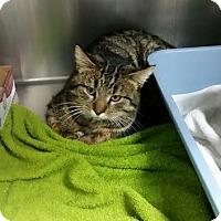 Adopt A Pet :: Bert - Chippewa Falls, WI