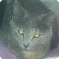 Adopt A Pet :: CINDERELLA - Gloucester, VA