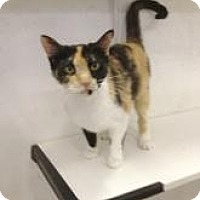 Adopt A Pet :: Patches - St. James City, FL