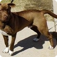 Adopt A Pet :: Oscar - Washington Court House, OH