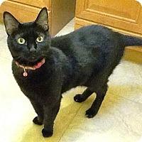 Adopt A Pet :: Maggie - Gilbert, AZ