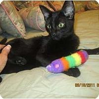 Adopt A Pet :: Tia - Sterling Hgts, MI