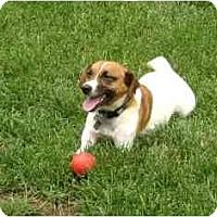 Adopt A Pet :: Tripaw - Omaha, NE
