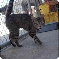 Adopt A Pet :: Princess - El Cajon, CA