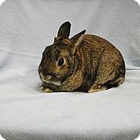 Adopt A Pet :: Valentino - Los Angeles, CA