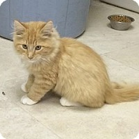 Adopt A Pet :: Clyde - Ogallala, NE