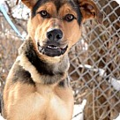 Adopt A Pet :: Luther