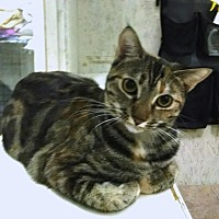 Adopt A Pet :: Cinnamon - St. James City, FL