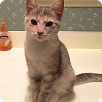Adopt A Pet :: Aurora - East Brunswick, NJ