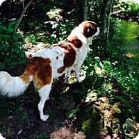 Adopt A Pet :: VIVI - Sudbury, MA