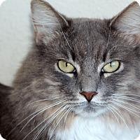 Adopt A Pet :: Vienna - Sarasota, FL