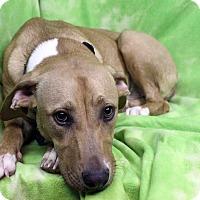 Adopt A Pet :: Geneva - Westminster, CO