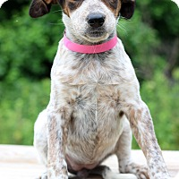Adopt A Pet :: Vivian - Waldorf, MD