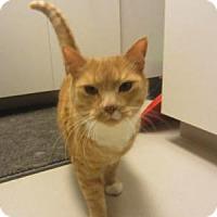 Adopt A Pet :: Vlad - Kingston, WA