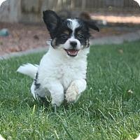 Adopt A Pet :: Mack - Henderson, NV