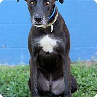 Adopt A Pet :: Spartan - Waldorf, MD