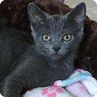 Adopt A Pet :: GRACIE - Lanoka Harbor, NJ