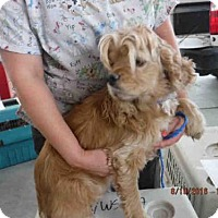 Adopt A Pet :: TAFFY - Oroville, CA