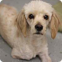 Adopt A Pet :: MACLOVIA - Phoenix, AZ