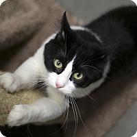 Adopt A Pet :: Garth - Fremont, NE