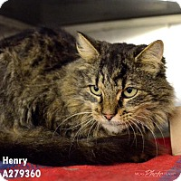 Adopt A Pet :: HENRY - Conroe, TX