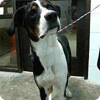 Adopt A Pet :: HANNIBAL - Tulsa, OK