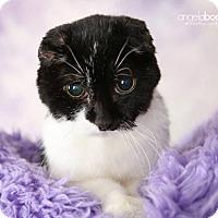 Adopt A Pet :: Grandma Rose - St Paul, MN