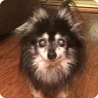 Adopt A Pet :: Tillie - Delaware, OH