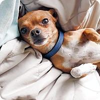 Adopt A Pet :: Aldwyn! *ADOPTION PENDING* - New York, NY