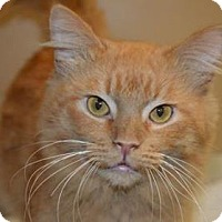 Adopt A Pet :: Sugarpiehoneybunch - Ashtabula, OH