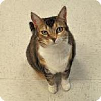 Adopt A Pet :: Misty - Suwanee, GA