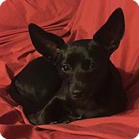 Adopt A Pet :: Ella - Morgantown, WV