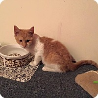 Adopt A Pet :: Inspector - Brick, NJ
