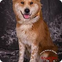 Adopt A Pet :: Miss Ellie - Stafford Springs, CT
