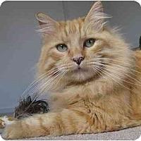 Adopt A Pet :: Benedict - Davis, CA