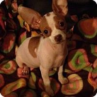Adopt A Pet :: Mischa - Las Vegas, NV