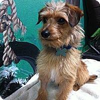 Adopt A Pet :: Robin - Goleta, CA