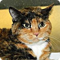 Adopt A Pet :: Sheba - Cheyenne, WY