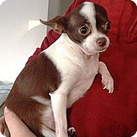 Adopt A Pet :: Molly - Poulsob, WA