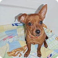 Adopt A Pet :: Mickey - Corona, CA