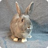 Adopt A Pet :: Cherise - Newport, DE