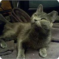 Adopt A Pet :: Cloudy - Portland, ME