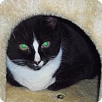 Adopt A Pet :: Sasha - Secaucus, NJ