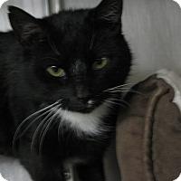 Adopt A Pet :: Penelope-PetSmart - Voorhees, NJ