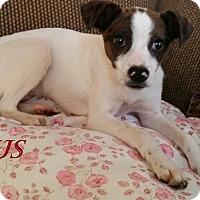 Adopt A Pet :: Cyrus In San Antonio - San Antonio, TX