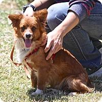 Adopt A Pet :: Timmy - Winters, CA