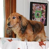 Adopt A Pet :: Tara - Marcellus, MI