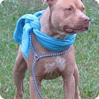 Adopt A Pet :: Randall-LOCAL - Lebanon, ME